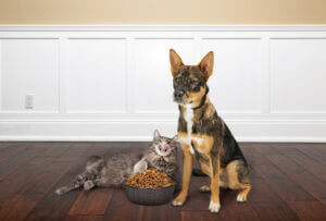 Protect Hardwood Floors from Pets