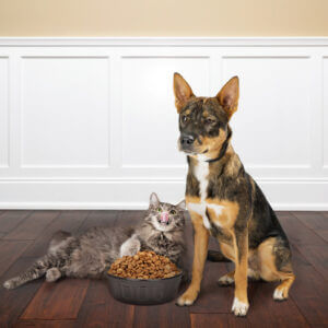 How to Protect Hardwood Floors from Pets